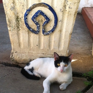 UNESCO Heritage Cat, just lazing around